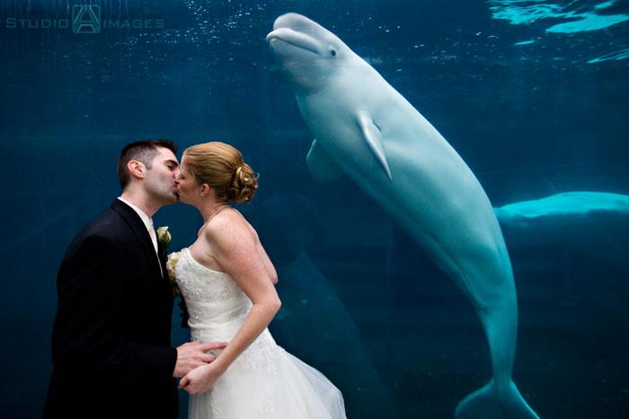 Mystic Aquarium Wedding Photos Connecticut Wedding